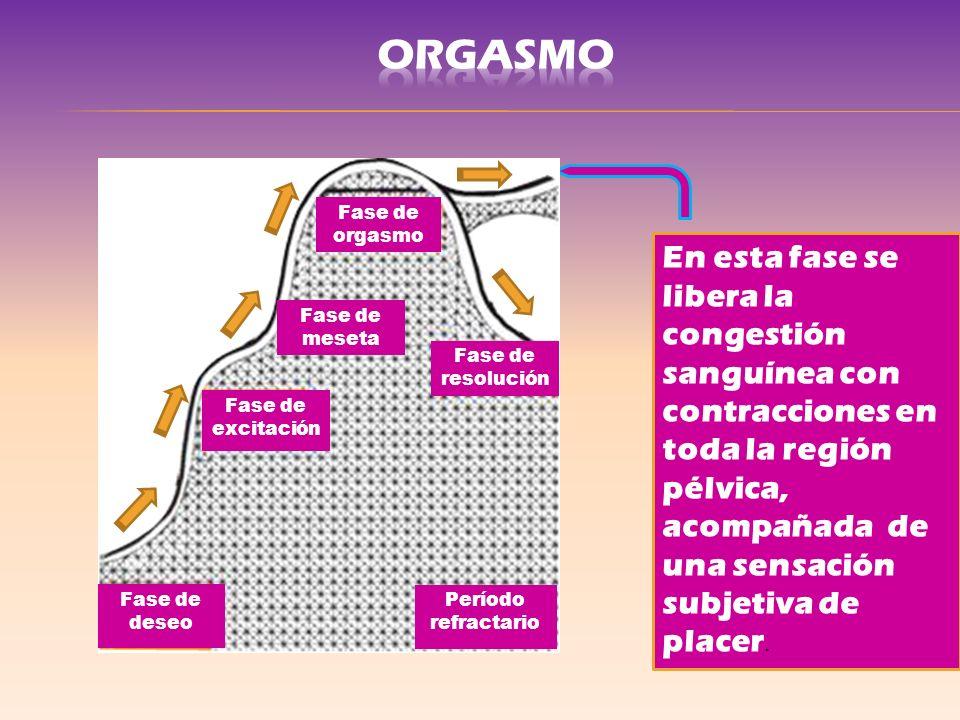 En esta fase se libera la congestión sanguínea con contracciones en toda la región pélvica, acompañada de una sensación subjetiva de placer. Fase de e