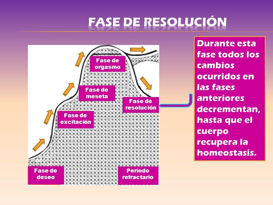 Durante esta fase todos los cambios ocurridos en las fases anteriores decrementan, hasta que el cuerpo recupera la homeostasis. Fase de excitación Fas