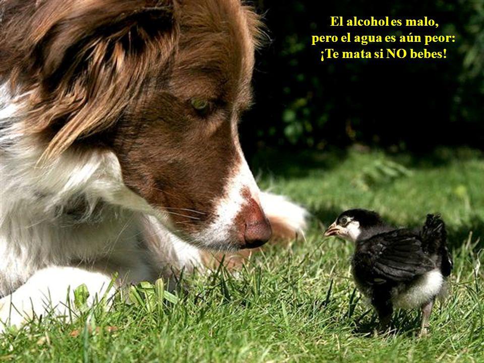 El perro es el mejor amigo del hombre. Yo me encargo de las mujeres. (El Gato) El perro es el mejor amigo del hombre. Yo me encargo de las mujeres. (E
