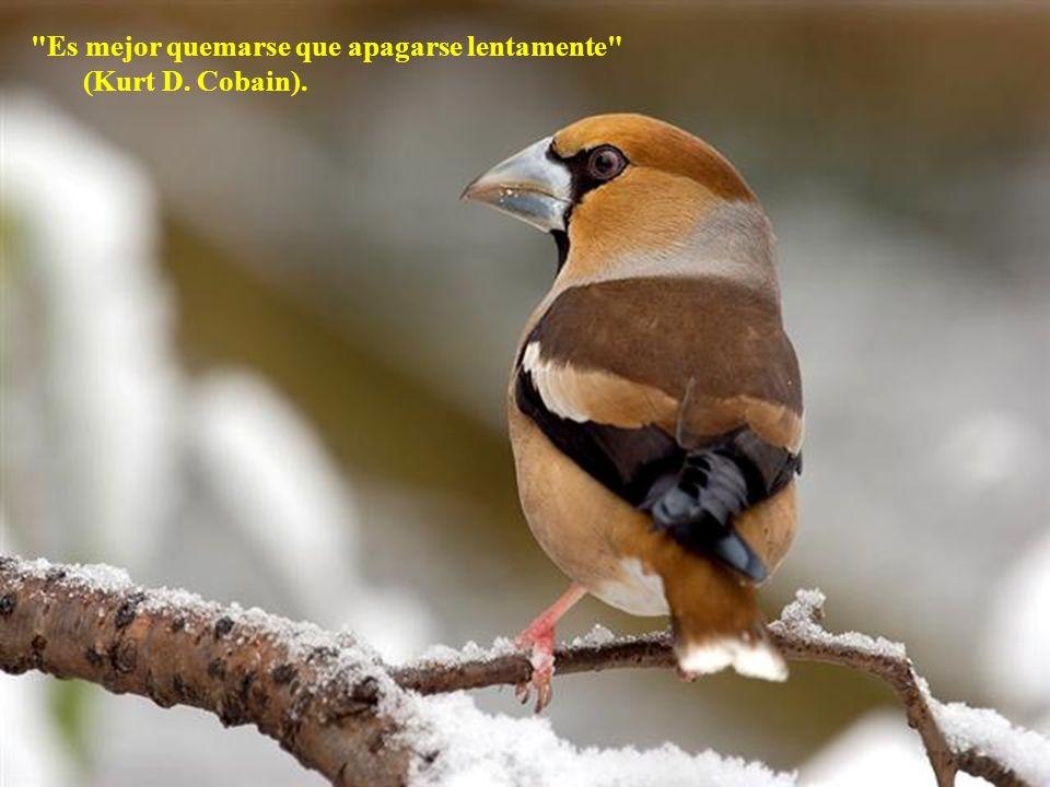 Se necesitan dos años para aprender a hablar y cincuenta y tres para aprender a callar (Hugo Chavez) Siempre que alguien te lo enseñe.