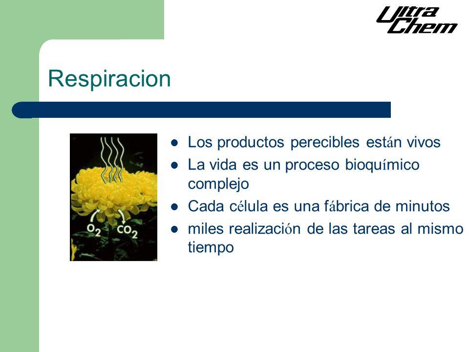 Respiracion Los productos perecibles est á n vivos La vida es un proceso bioqu í mico complejo Cada c é lula es una f á brica de minutos miles realizaci ó n de las tareas al mismo tiempo