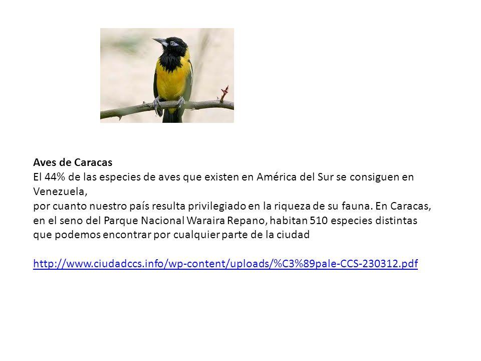 Aves de Caracas El 44% de las especies de aves que existen en América del Sur se consiguen en Venezuela, por cuanto nuestro país resulta privilegiado