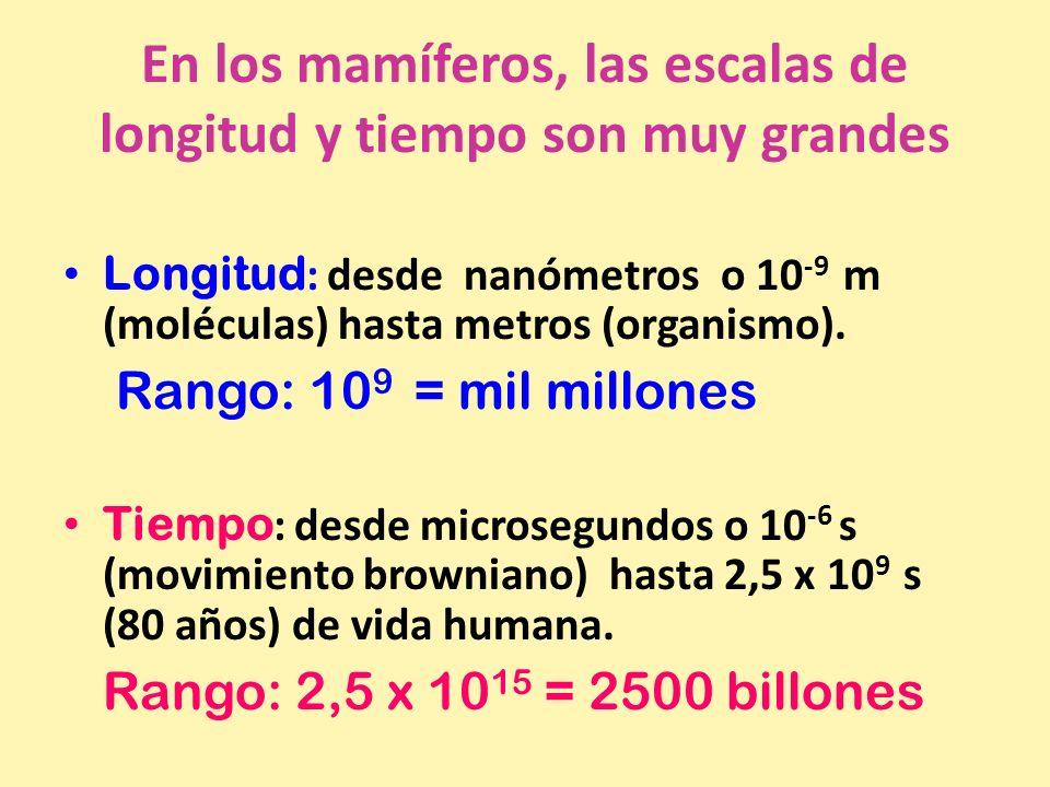 En los mamíferos, las escalas de longitud y tiempo son muy grandes Longitud : desde nanómetros o 10 -9 m (moléculas) hasta metros (organismo). Rango: