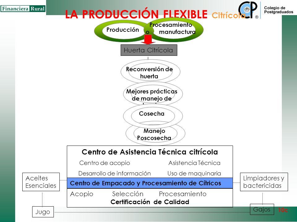 LA PRODUCCIÓN Citrícola Producción y Procesamiento 10c Capital Empresarial Competitividad en Insumos Mejores prácticas Acopio y movilización Acopio Hu