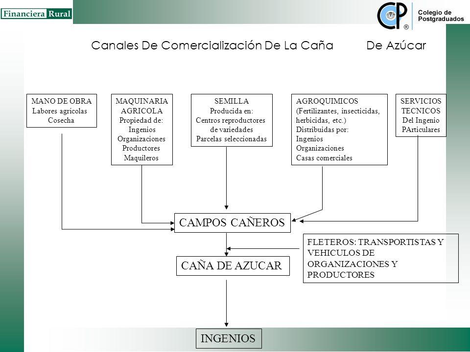 Canales De Comercialización Del Café PRODUCCIÓ N PROCESO COMERCIALIZACIÓN