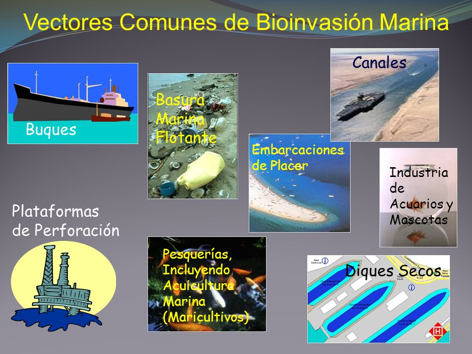 Buques Plataformas de Perforación Pesquerías, Incluyendo Acuicultura Marina (Maricultivos) Diques Secos Canales Basura Marina Flotante Industria de Ac