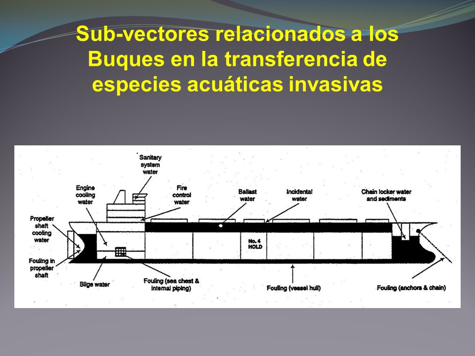 Sub-vectores relacionados a los Buques en la transferencia de especies acuáticas invasivas