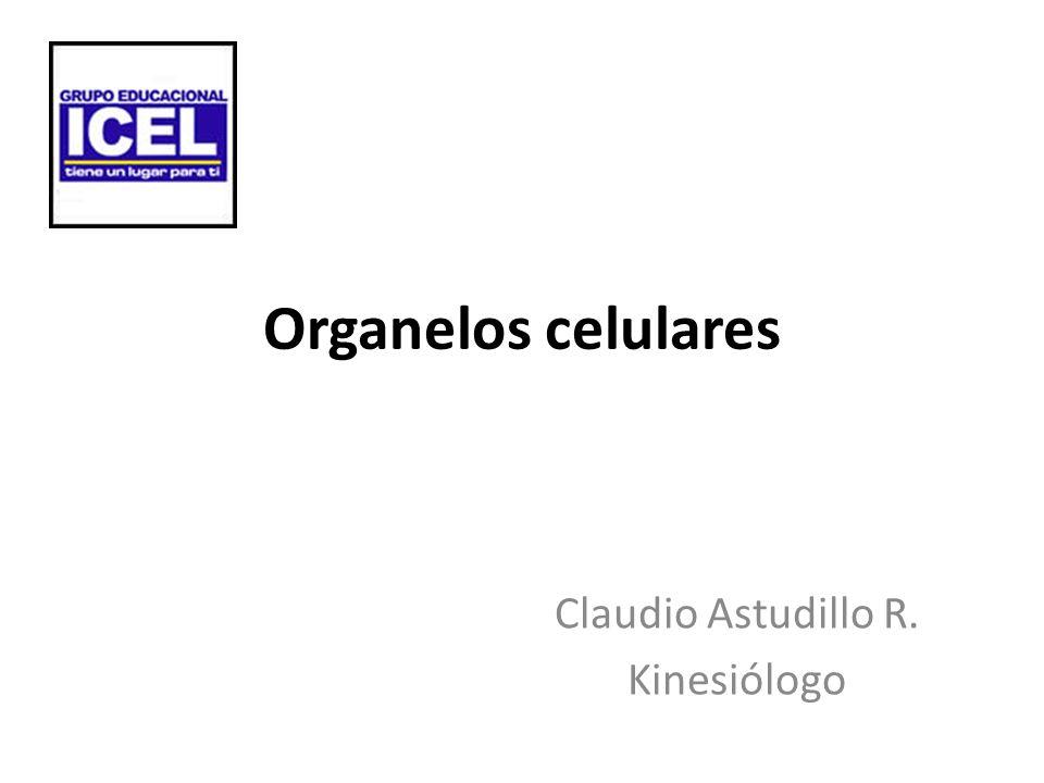 Organelos celulares Claudio Astudillo R. Kinesiólogo