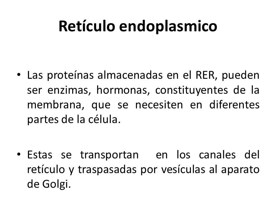 Retículo endoplasmico Las proteínas almacenadas en el RER, pueden ser enzimas, hormonas, constituyentes de la membrana, que se necesiten en diferentes