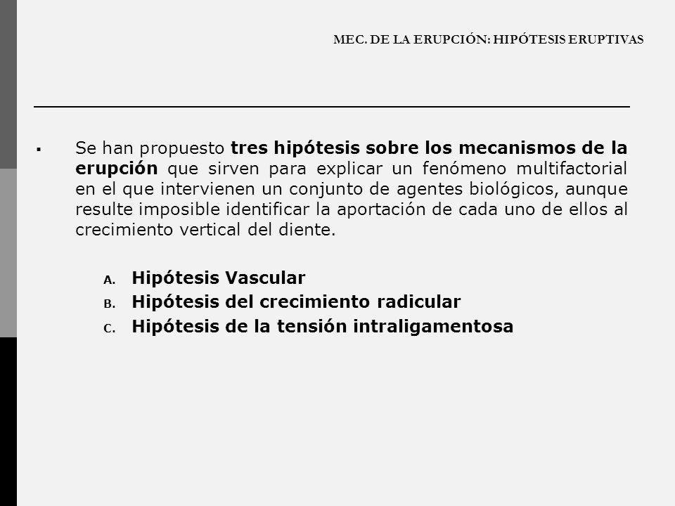 MEC. DE LA ERUPCIÓN: HIPÓTESIS ERUPTIVAS Se han propuesto tres hipótesis sobre los mecanismos de la erupción que sirven para explicar un fenómeno mult