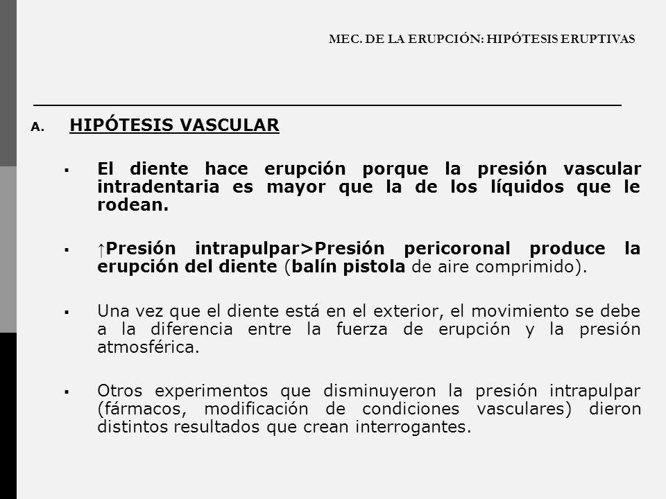 MEC. DE LA ERUPCIÓN: HIPÓTESIS ERUPTIVAS A. HIPÓTESIS VASCULAR El diente hace erupción porque la presión vascular intradentaria es mayor que la de los