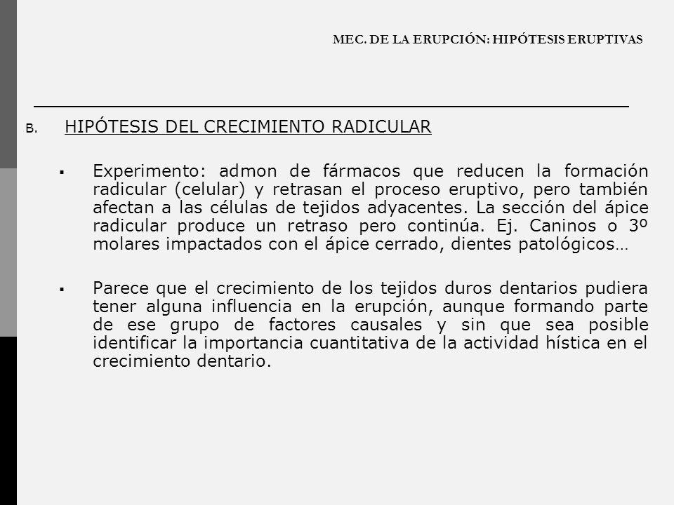 MEC. DE LA ERUPCIÓN: HIPÓTESIS ERUPTIVAS B. HIPÓTESIS DEL CRECIMIENTO RADICULAR Experimento: admon de fármacos que reducen la formación radicular (cel