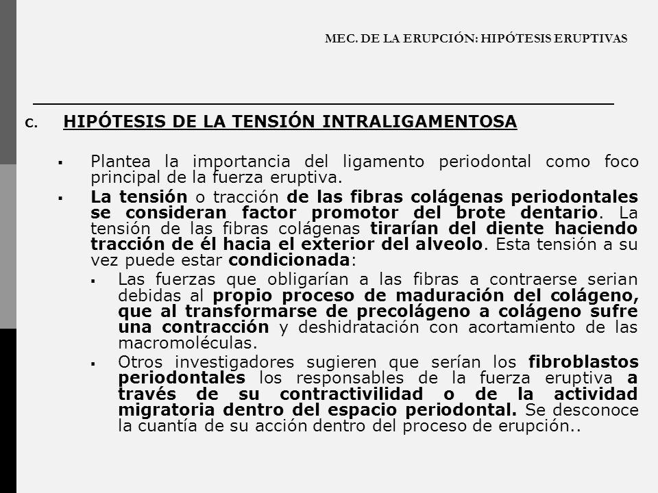 MEC. DE LA ERUPCIÓN: HIPÓTESIS ERUPTIVAS C. HIPÓTESIS DE LA TENSIÓN INTRALIGAMENTOSA Plantea la importancia del ligamento periodontal como foco princi