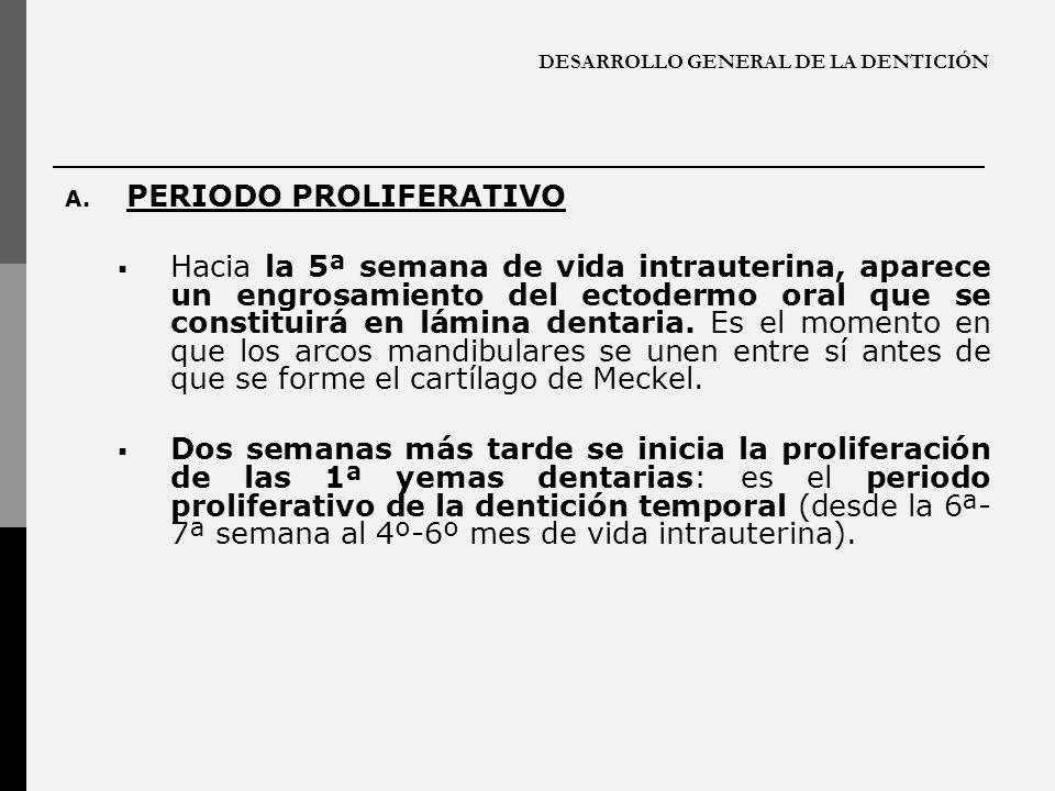 DESARROLLO GENERAL DE LA DENTICIÓN A. PERIODO PROLIFERATIVO Hacia la 5ª semana de vida intrauterina, aparece un engrosamiento del ectodermo oral que s