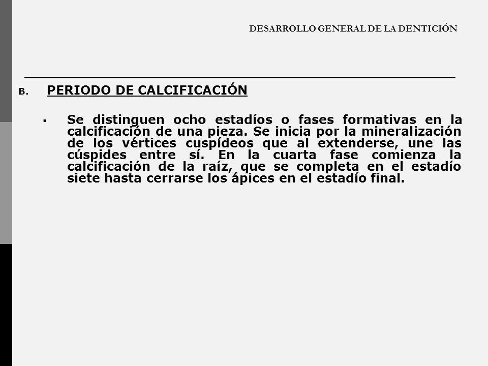 DESARROLLO GENERAL DE LA DENTICIÓN B. PERIODO DE CALCIFICACIÓN Se distinguen ocho estadíos o fases formativas en la calcificación de una pieza. Se ini