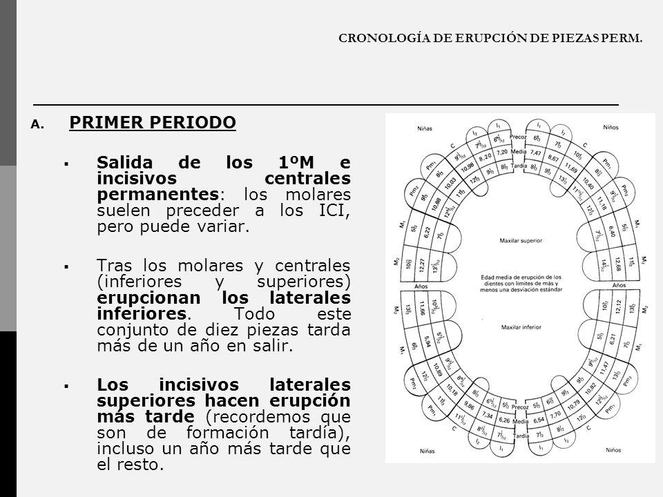 CRONOLOGÍA DE ERUPCIÓN DE PIEZAS PERM.A.