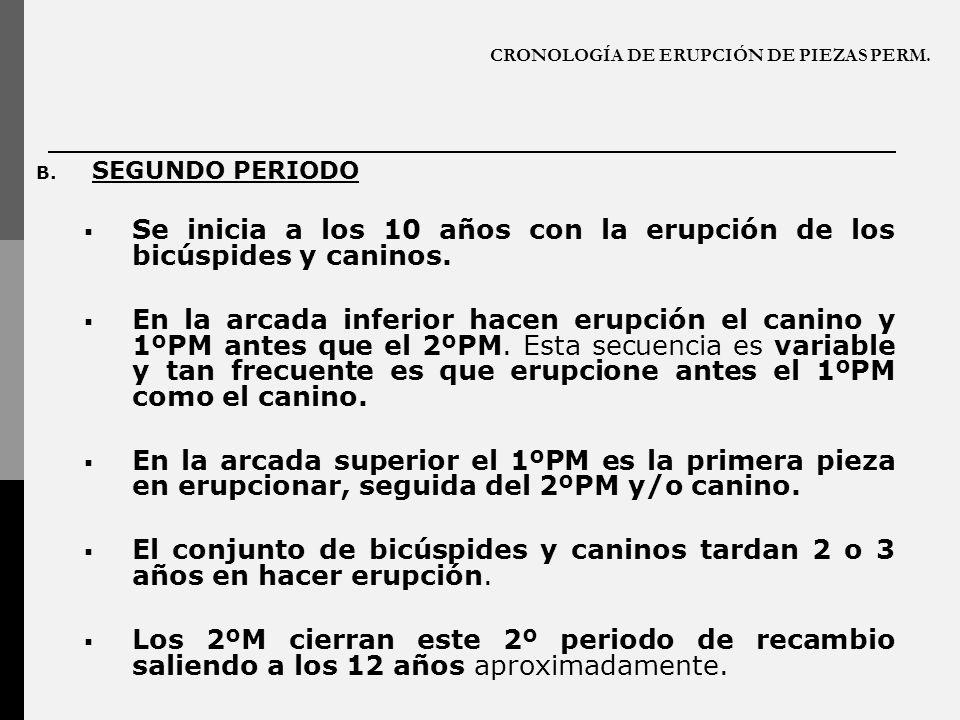 CRONOLOGÍA DE ERUPCIÓN DE PIEZAS PERM. B. SEGUNDO PERIODO Se inicia a los 10 años con la erupción de los bicúspides y caninos. En la arcada inferior h