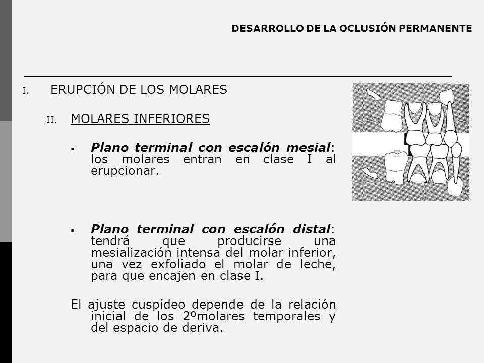 DESARROLLO DE LA OCLUSIÓN PERMANENTE I. ERUPCIÓN DE LOS MOLARES II. MOLARES INFERIORES Plano terminal con escalón mesial: los molares entran en clase