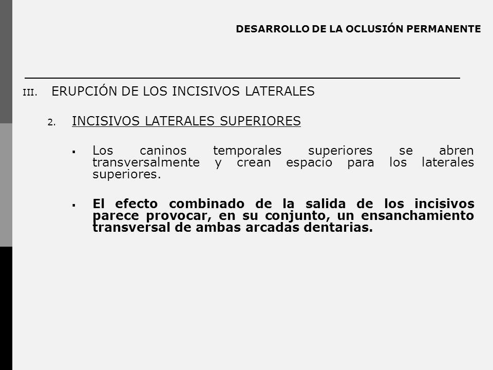 DESARROLLO DE LA OCLUSIÓN PERMANENTE III. ERUPCIÓN DE LOS INCISIVOS LATERALES 2. INCISIVOS LATERALES SUPERIORES Los caninos temporales superiores se a