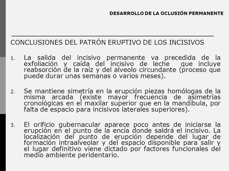 DESARROLLO DE LA OCLUSIÓN PERMANENTE CONCLUSIONES DEL PATRÓN ERUPTIVO DE LOS INCISIVOS 1. La salida del incisivo permanente va precedida de la exfolia