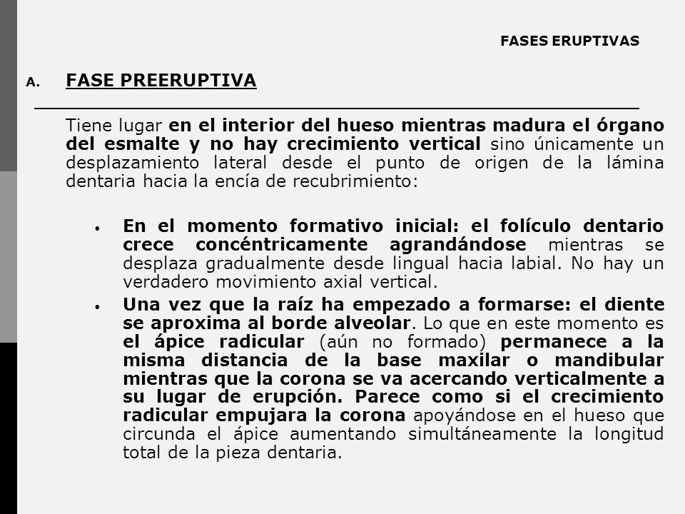 FASES ERUPTIVAS A.