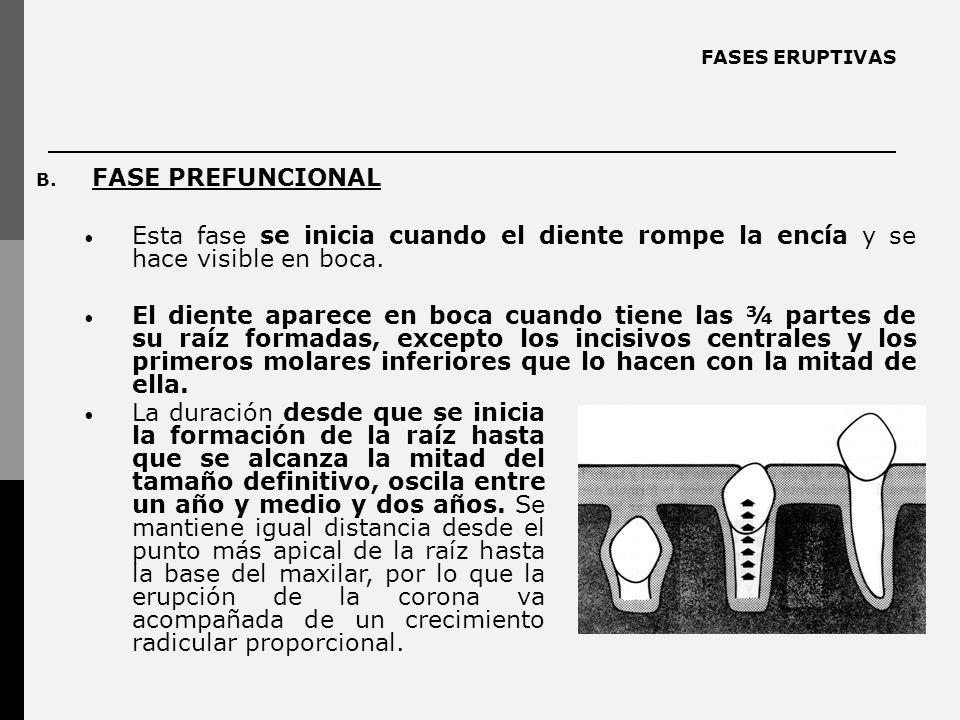 FASES ERUPTIVAS B. FASE PREFUNCIONAL Esta fase se inicia cuando el diente rompe la encía y se hace visible en boca. El diente aparece en boca cuando t