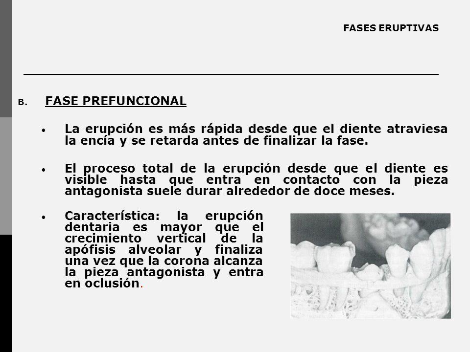 FASES ERUPTIVAS B. FASE PREFUNCIONAL La erupción es más rápida desde que el diente atraviesa la encía y se retarda antes de finalizar la fase. El proc