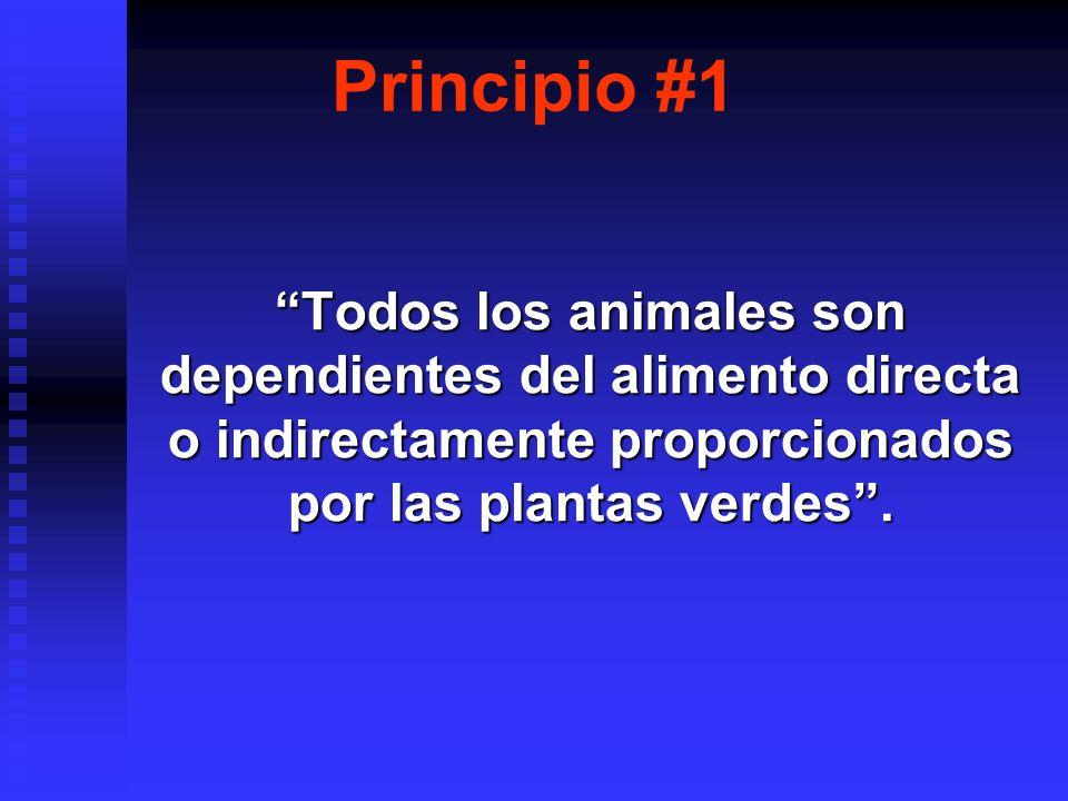 Principio #12 La cantidad de alimento que puede ser usado por unidad de área por día está limitada por la eficiencia del sistema ecológico en procesar los desechos y reoxigenar el medio