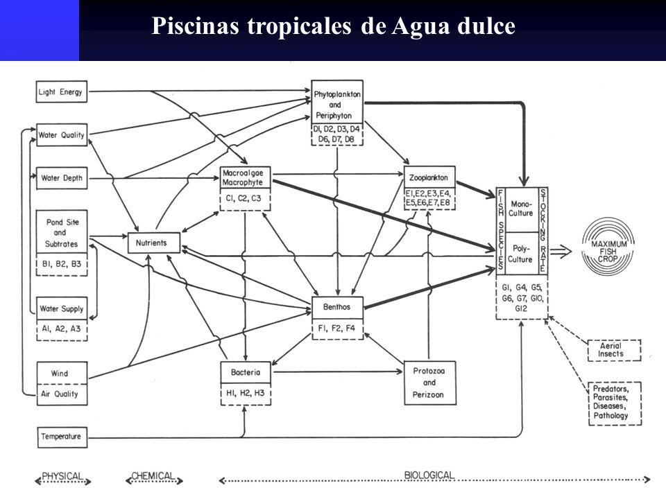 Recambios de Agua Metodología usada para: Metodología usada para: Sacar compuestos no deseados del sistema.