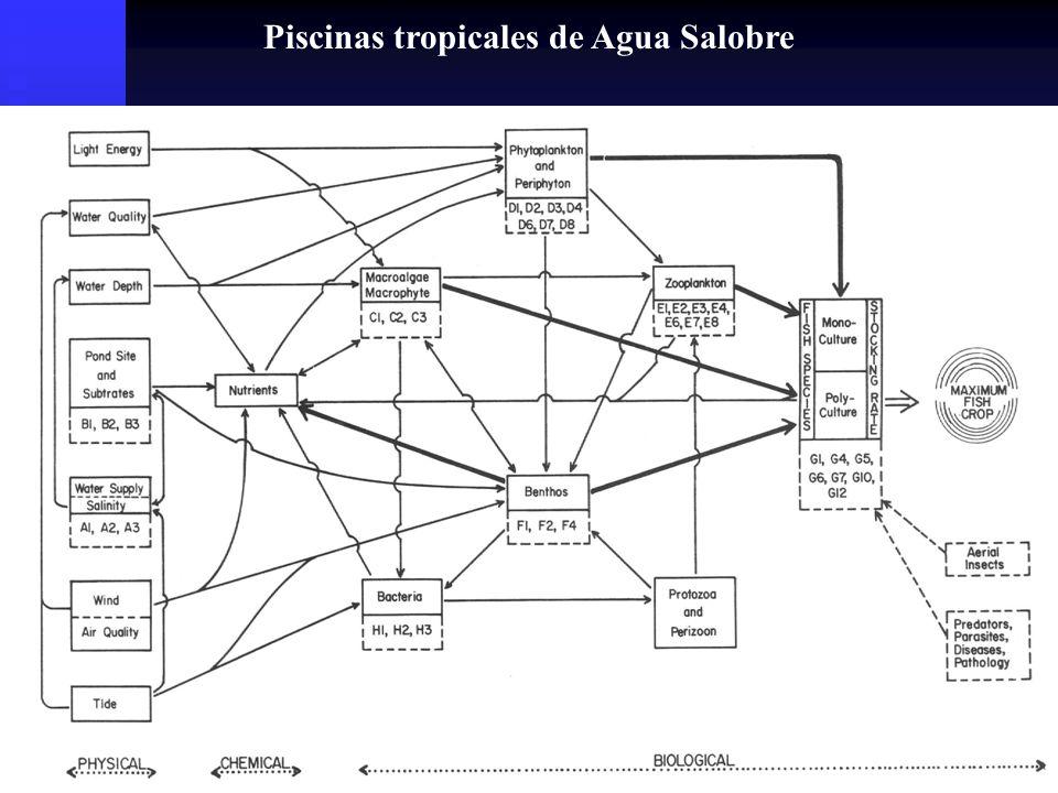 Relación entre la productividad fitoplanctónica y la Alcalinidad total en piscinas fertilizadas y no fertilizadas en Auburn, AL.