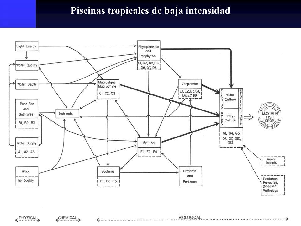 1) Proteínas: 30 y 45% Carpas28% Catfish32% Truchas42% L.