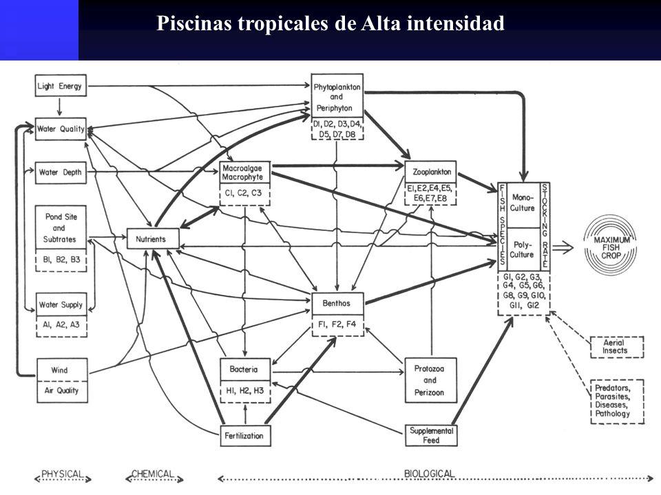 Metodologías de Recambio Traspaso: Traspaso: Cambio de agua total.