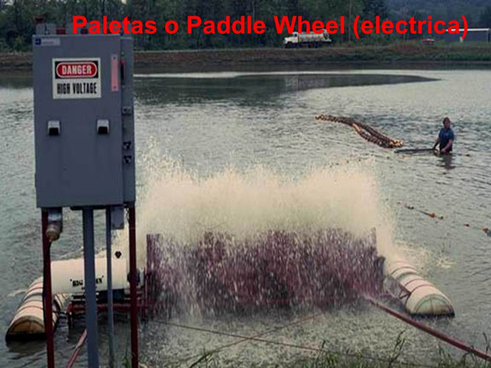 Paletas o Paddle Wheel (electrica)