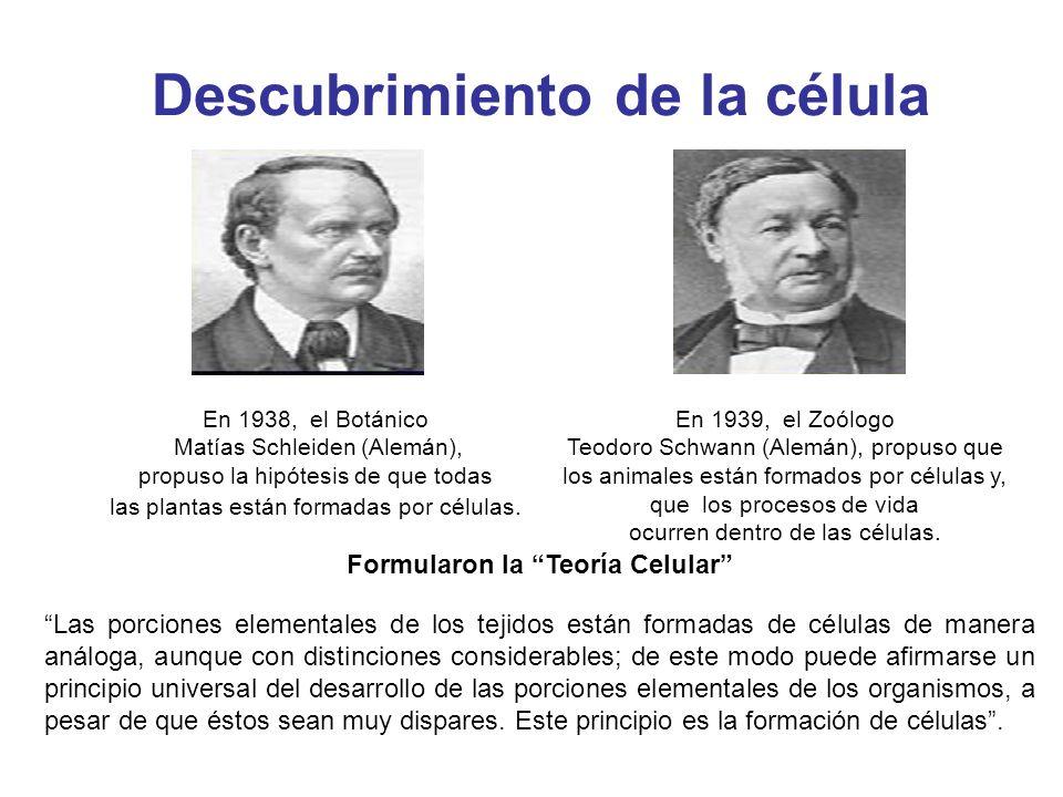 Descubrimiento de la célula En 1938, el Botánico Matías Schleiden (Alemán), propuso la hipótesis de que todas las plantas están formadas por células.
