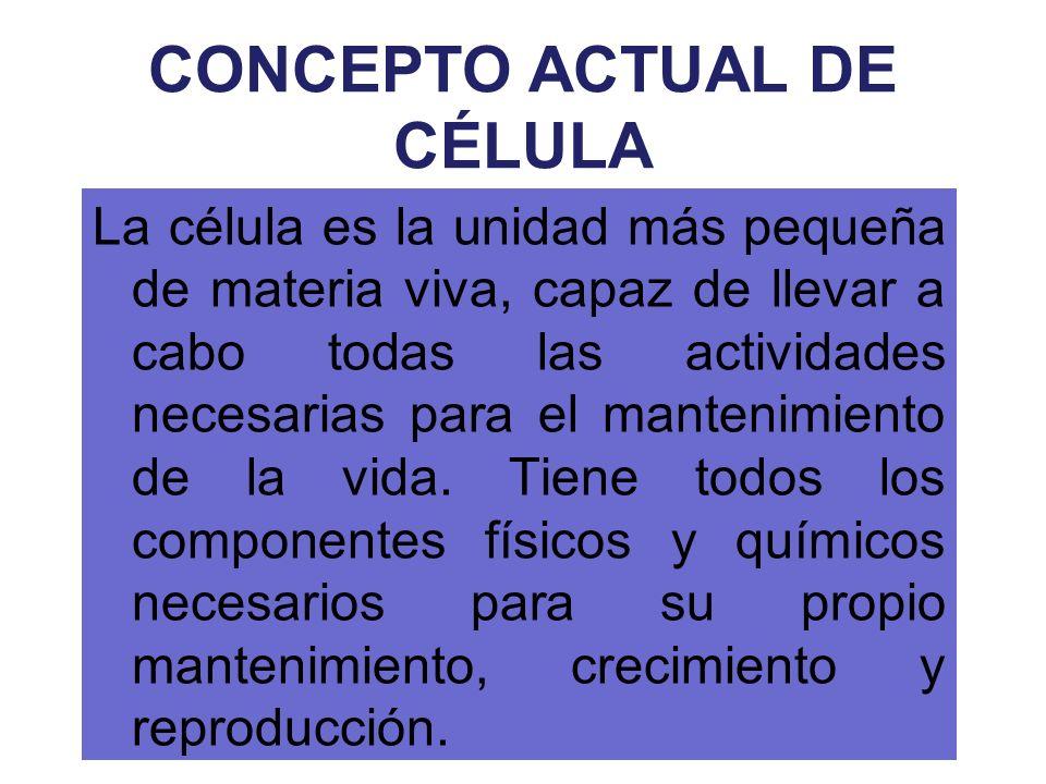 CONCEPTO ACTUAL DE CÉLULA La célula es la unidad más pequeña de materia viva, capaz de llevar a cabo todas las actividades necesarias para el mantenim