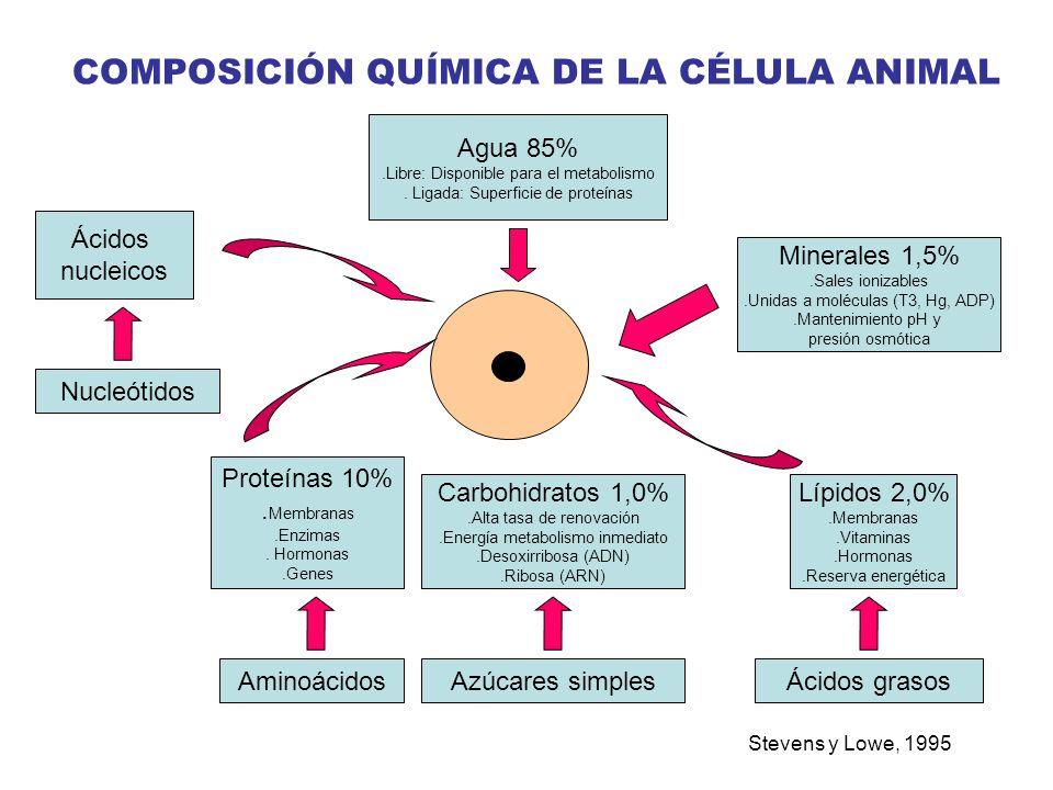 COMPOSICIÓN QUÍMICA DE LA CÉLULA ANIMAL Stevens y Lowe, 1995 Agua 85%.Libre: Disponible para el metabolismo. Ligada: Superficie de proteínas Ácidos nu