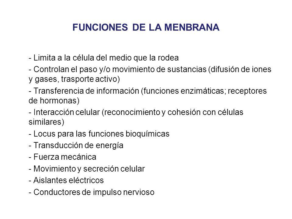 FUNCIONES DE LA MENBRANA - Limita a la célula del medio que la rodea - Controlan el paso y/o movimiento de sustancias (difusión de iones y gases, tras