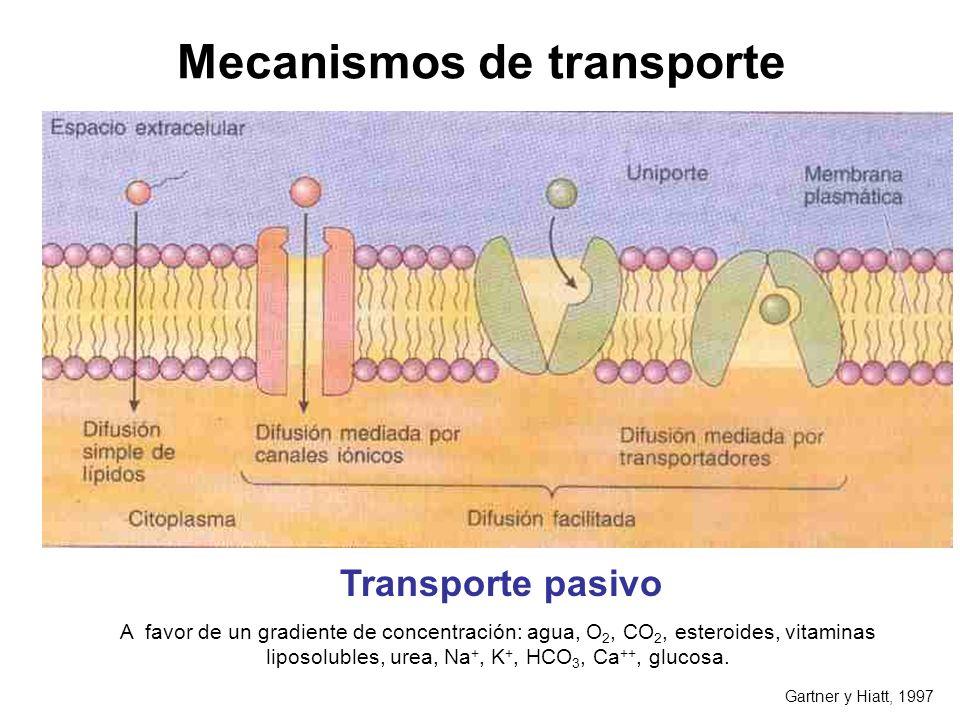Mecanismos de transporte Gartner y Hiatt, 1997 A favor de un gradiente de concentración: agua, O 2, CO 2, esteroides, vitaminas liposolubles, urea, Na