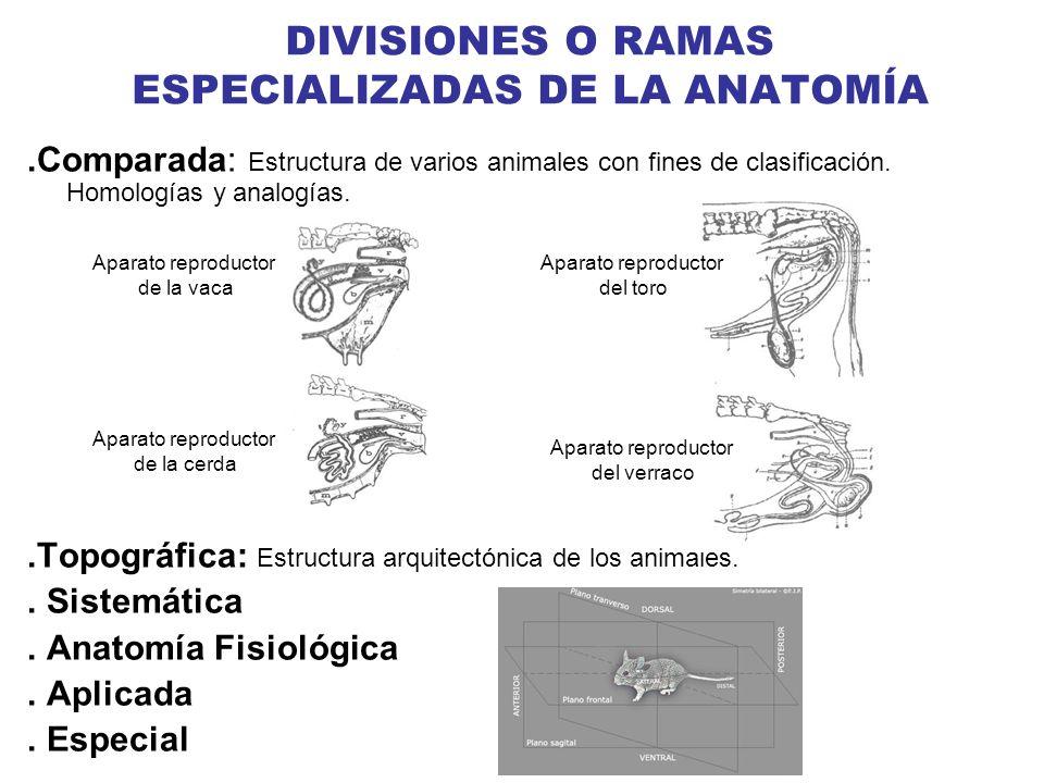 DIVISIONES O RAMAS ESPECIALIZADAS DE LA ANATOMÍA.Comparada: Estructura de varios animales con fines de clasificación. Homologías y analogías..Topográf