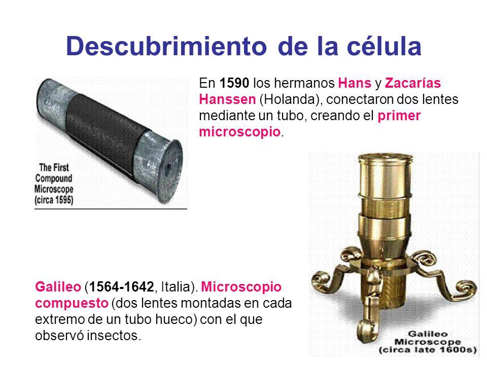 Descubrimiento de la célula En 1590 los hermanos Hans y Zacarías Hanssen (Holanda), conectaron dos lentes mediante un tubo, creando el primer microsco