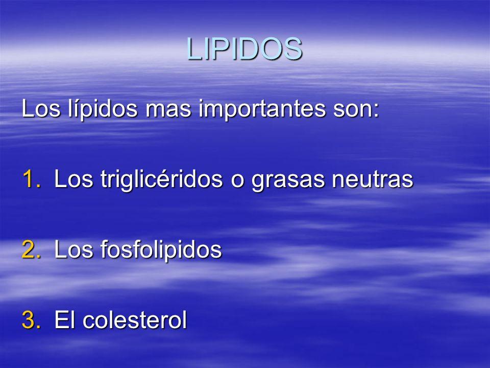 LIPIDOS Los lípidos mas importantes son: 1.Los triglicéridos o grasas neutras 2.Los fosfolipidos 3.El colesterol