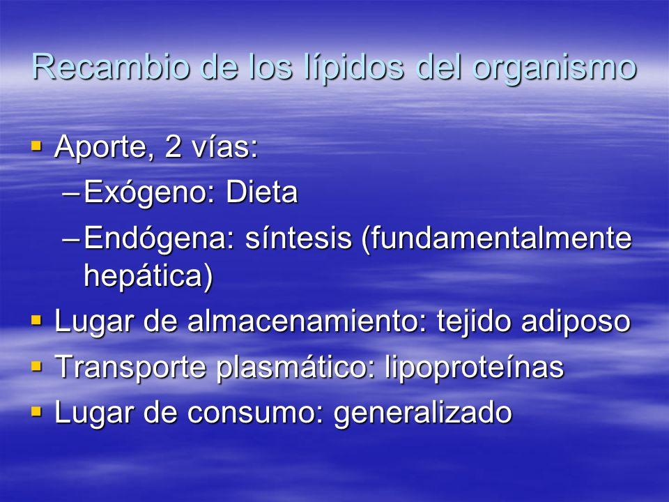 Recambio de los lípidos del organismo Aporte, 2 vías: Aporte, 2 vías: –Exógeno: Dieta –Endógena: síntesis (fundamentalmente hepática) Lugar de almacen