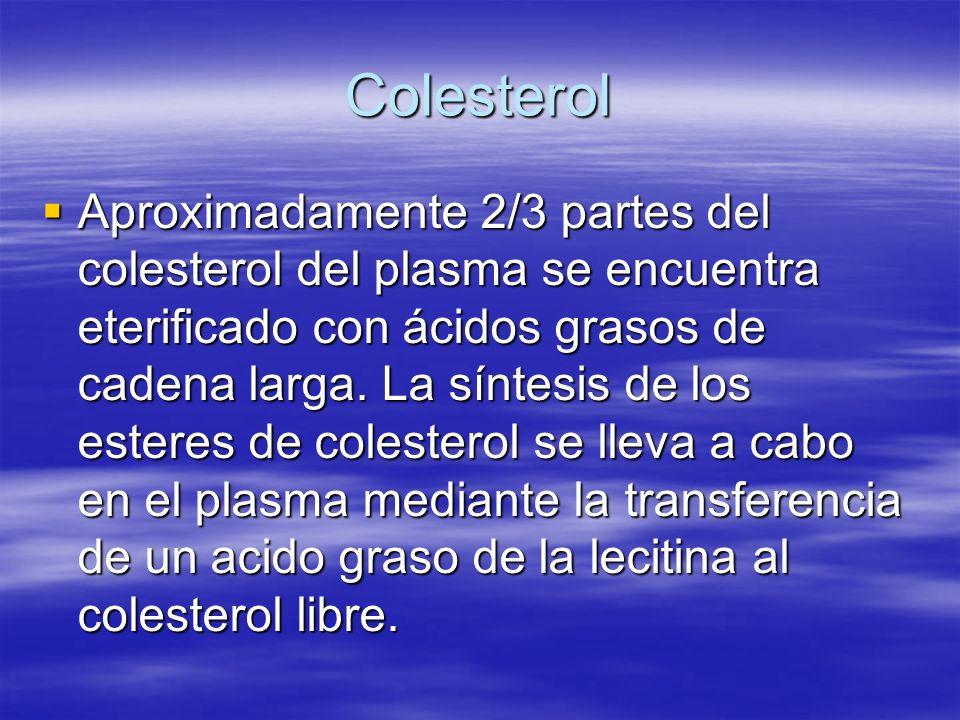 Colesterol Aproximadamente 2/3 partes del colesterol del plasma se encuentra eterificado con ácidos grasos de cadena larga. La síntesis de los esteres