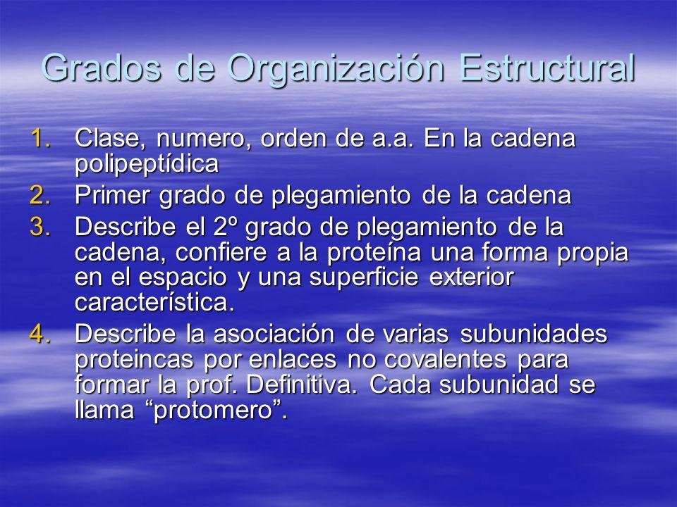 Grados de Organización Estructural 1.Clase, numero, orden de a.a. En la cadena polipeptídica 2.Primer grado de plegamiento de la cadena 3.Describe el