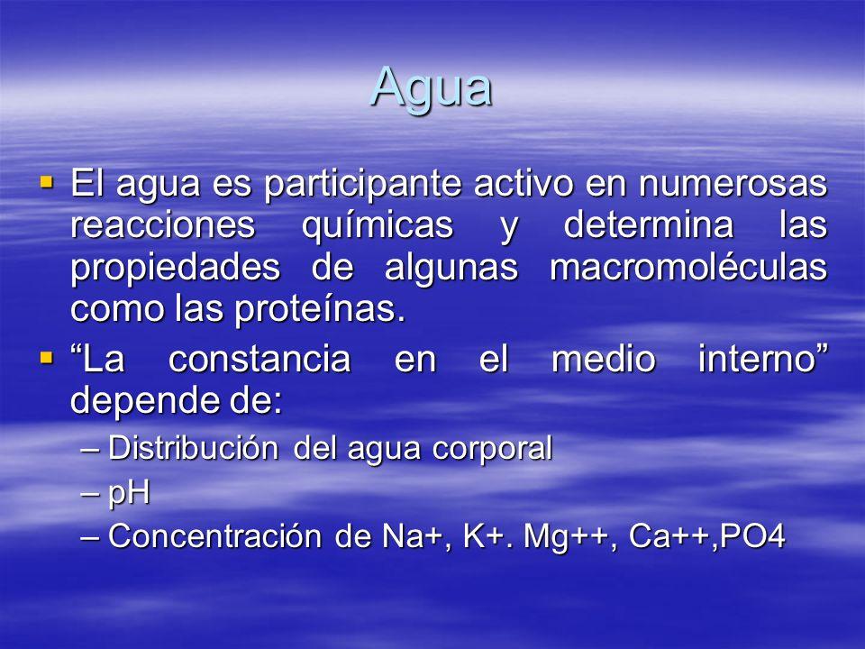 Agua El agua es participante activo en numerosas reacciones químicas y determina las propiedades de algunas macromoléculas como las proteínas. El agua
