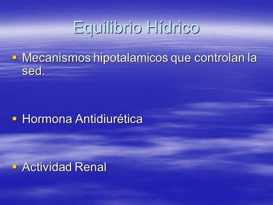 Equilibrio Hídrico Mecanismos hipotalamicos que controlan la sed. Mecanismos hipotalamicos que controlan la sed. Hormona Antidiurética Hormona Antidiu