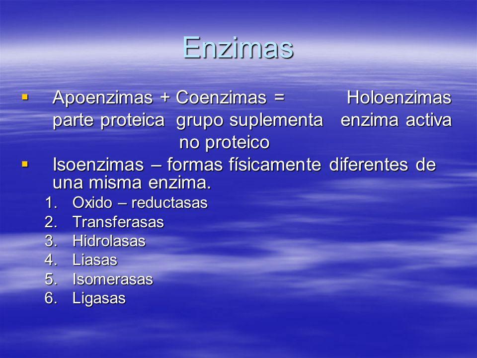 Enzimas Apoenzimas + Coenzimas = Holoenzimas Apoenzimas + Coenzimas = Holoenzimas parte proteica grupo suplementa enzima activa no proteico no proteic