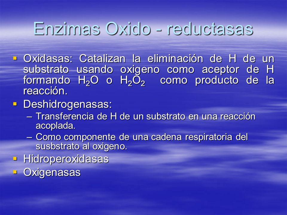 Enzimas Oxido - reductasas Oxidasas: Catalizan la eliminación de H de un substrato usando oxigeno como aceptor de H formando H 2 O o H 2 O 2 como prod