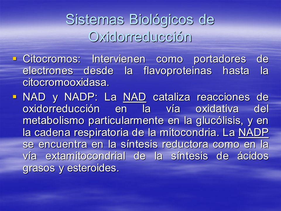 Sistemas Biológicos de Oxidorreducción Citocromos: Intervienen como portadores de electrones desde la flavoproteinas hasta la citocromooxidasa. Citocr