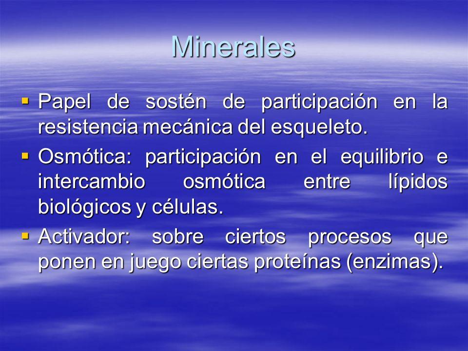 Minerales Papel de sostén de participación en la resistencia mecánica del esqueleto. Papel de sostén de participación en la resistencia mecánica del e
